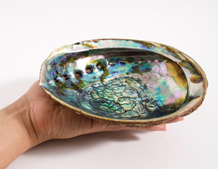 Large Abalone Shells